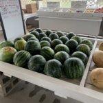 Missouri watermelon farmer