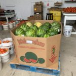homegrown watermelons for sale